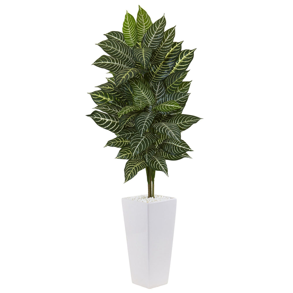 4' Zebra Plant in White Tower Planter