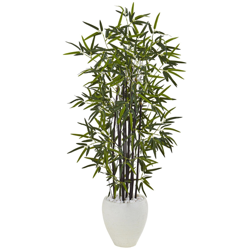 5' Black Bamboo Tree in White Oval Planter