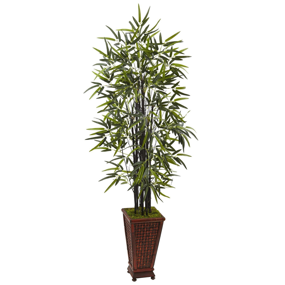 5.5' Black Bamboo Tree in Decorative Planter