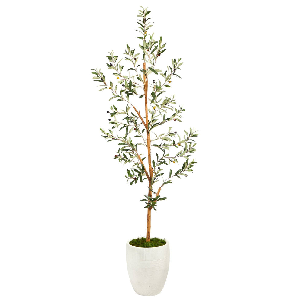 5.5' Olive Artificial Tree in White Planter