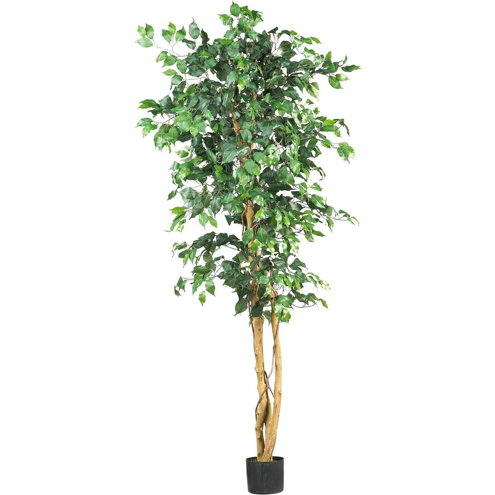 6 Ficus Silk Tree Nearly Natural