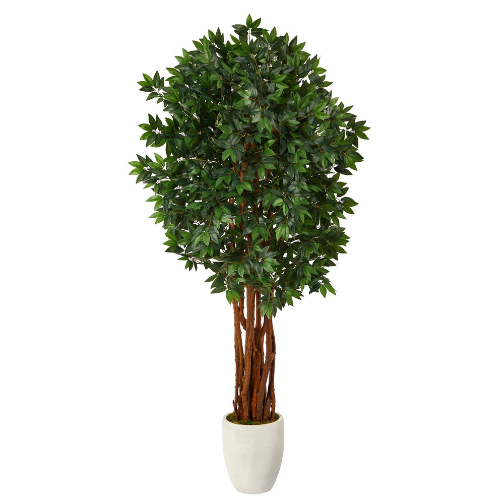 6' Lychee Artificial Tree in White Planter