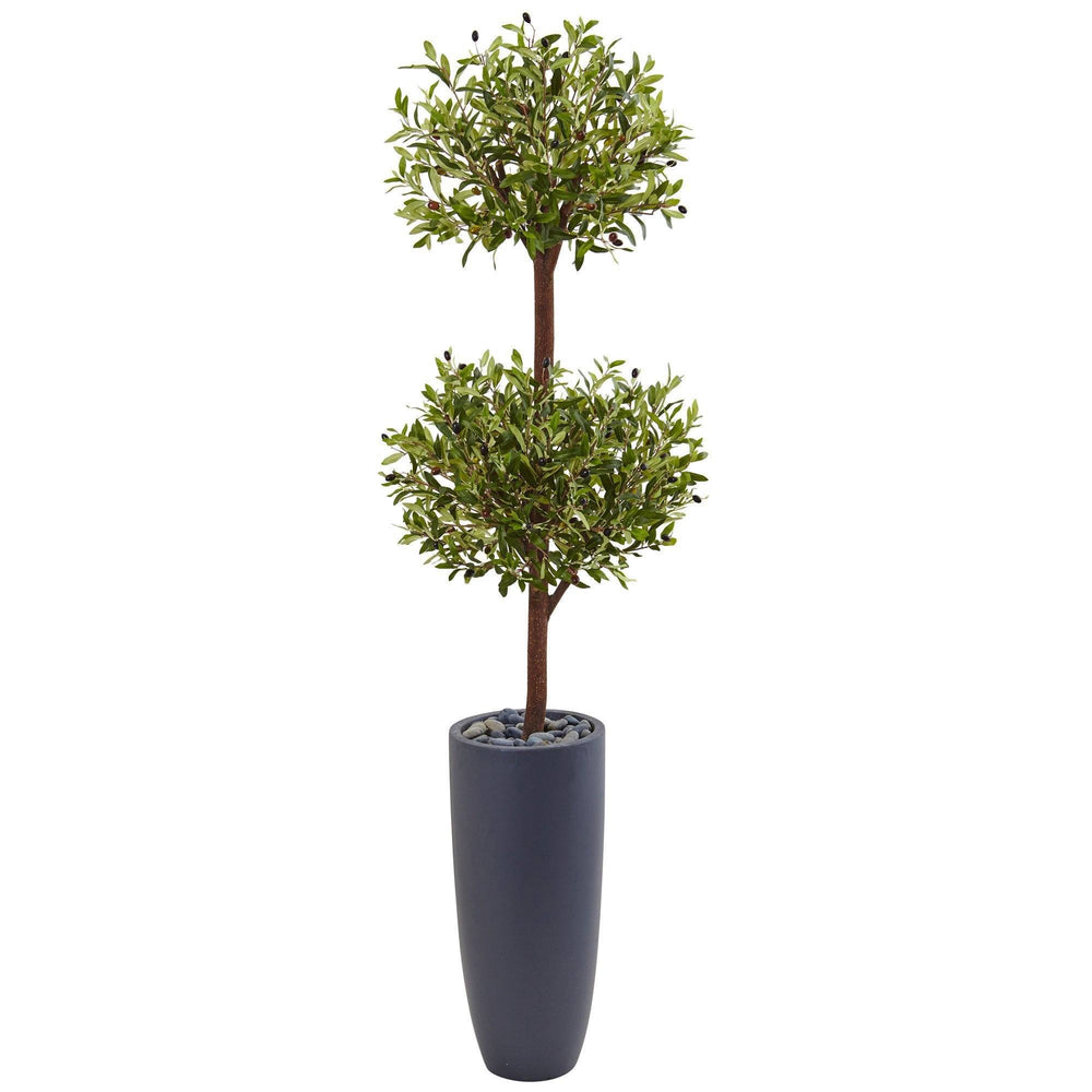 6' Olive Double Tree in Gray Cylinder Planter
