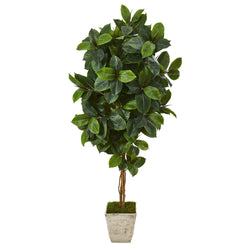 6' Rubber Leaf Artificial Tree in Country White Planter