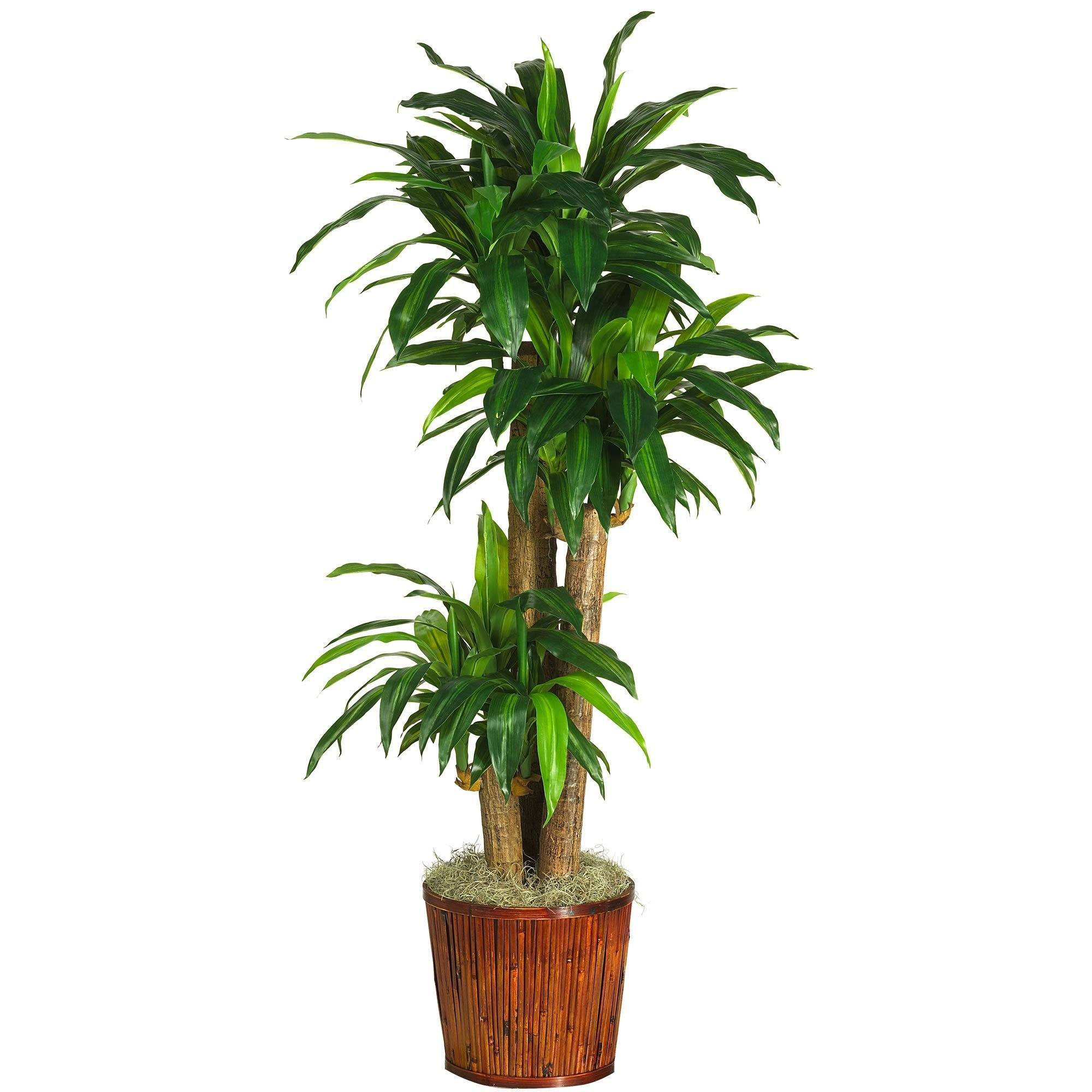 62 Dracena W Basket Silk Plant Real Touch Nearly Natural