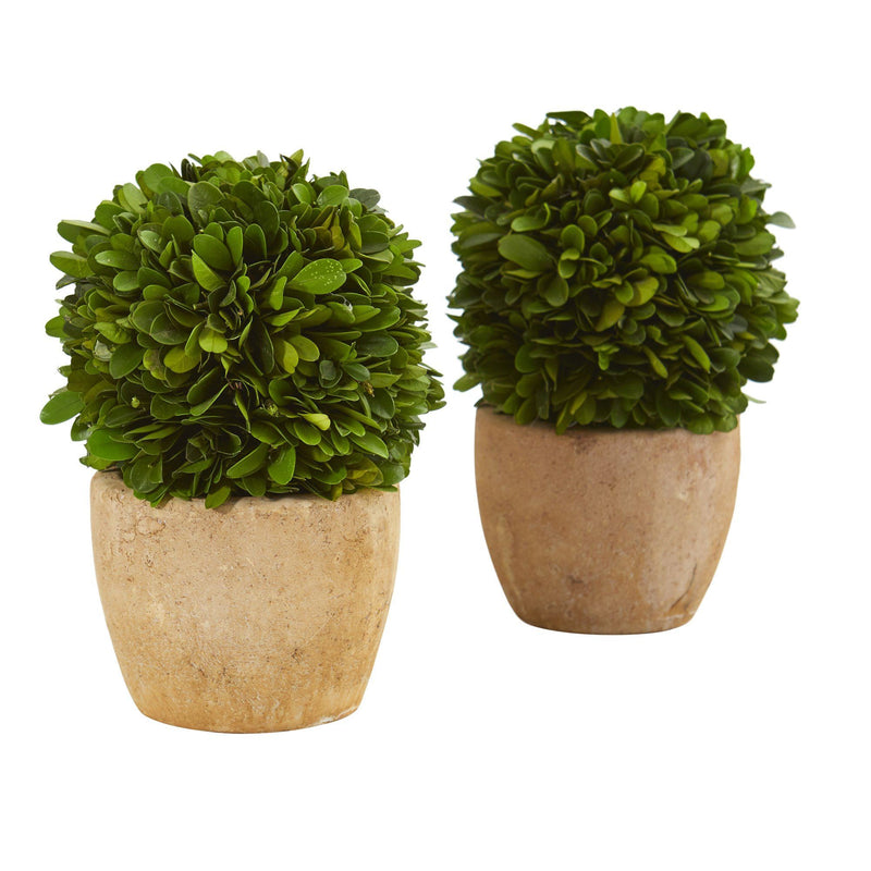"7"" Boxwood Ball Preserved Plant in Decorative Planter (Set of 2)"