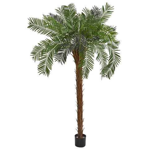 Silk Palm Cycas Plants