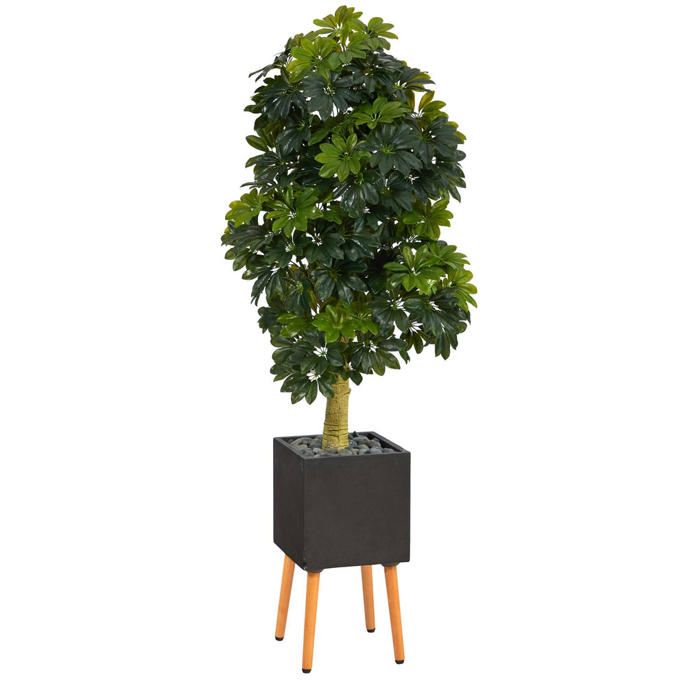"70"" Schefflera Artificial Tree in Black Planter with Stand (Real Touch)"
