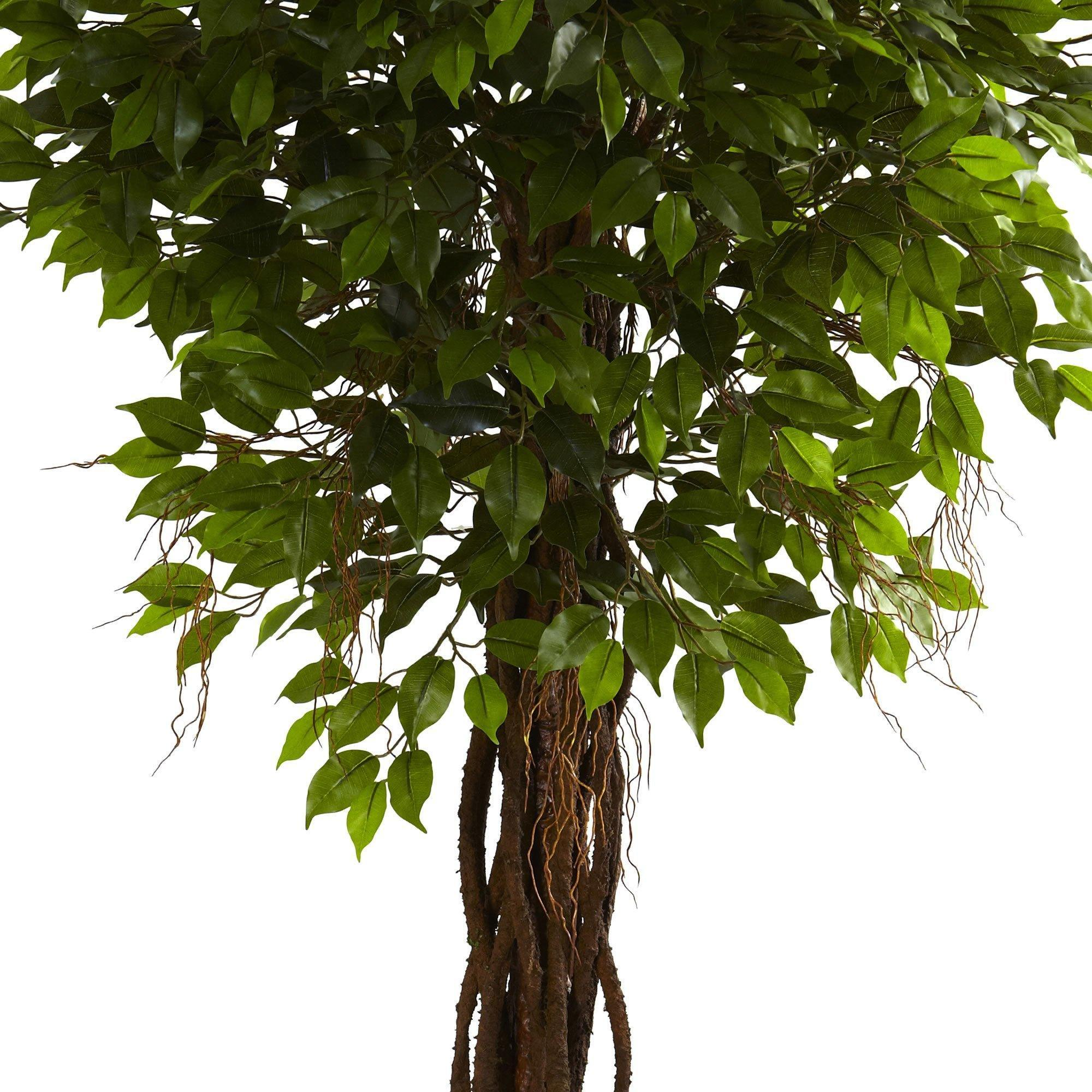 7 5 Ficus Tree Uv Resistant Indoor Outdoor Nearly Natural,Steamed Broccoli Brockly
