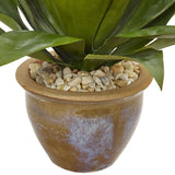 Agave in Glazed Clay Pot