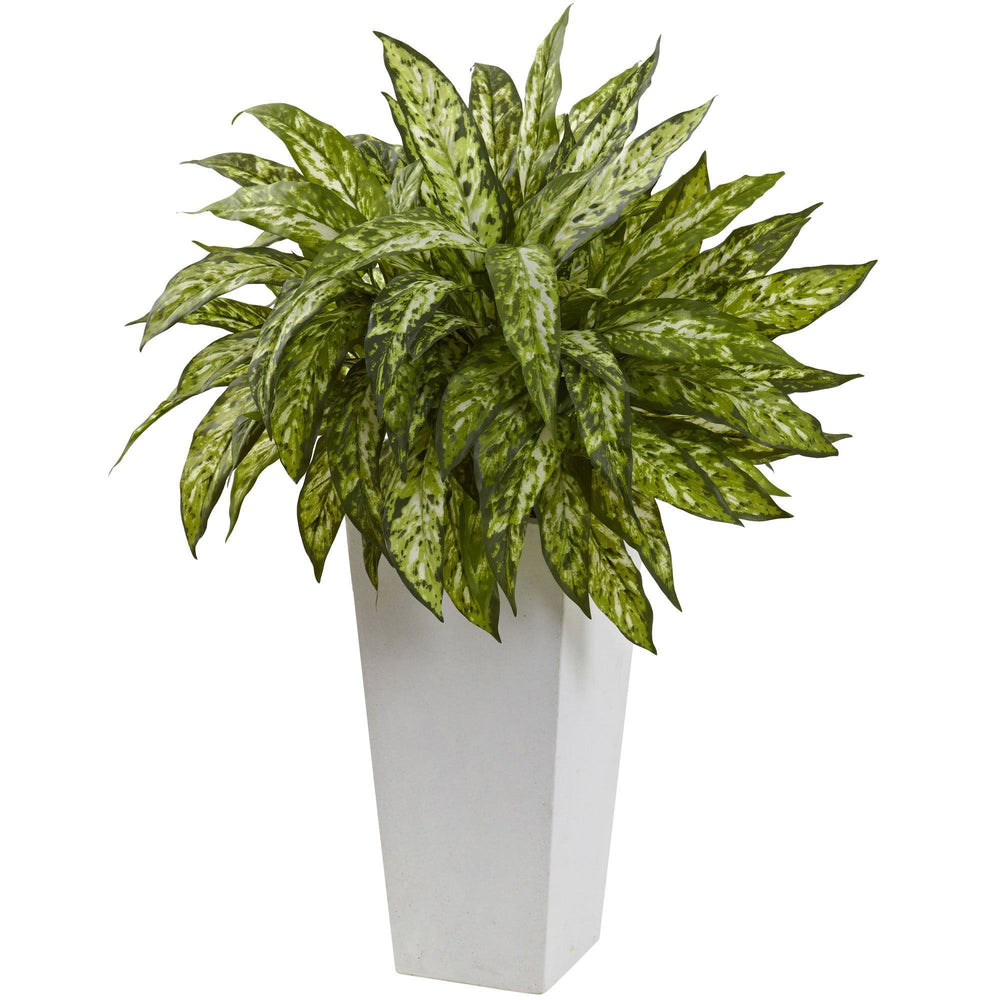 Aglaonema with White Decorative Planter