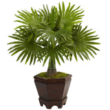 Assorted Mini Palm Trees in Planter (Set of 3)