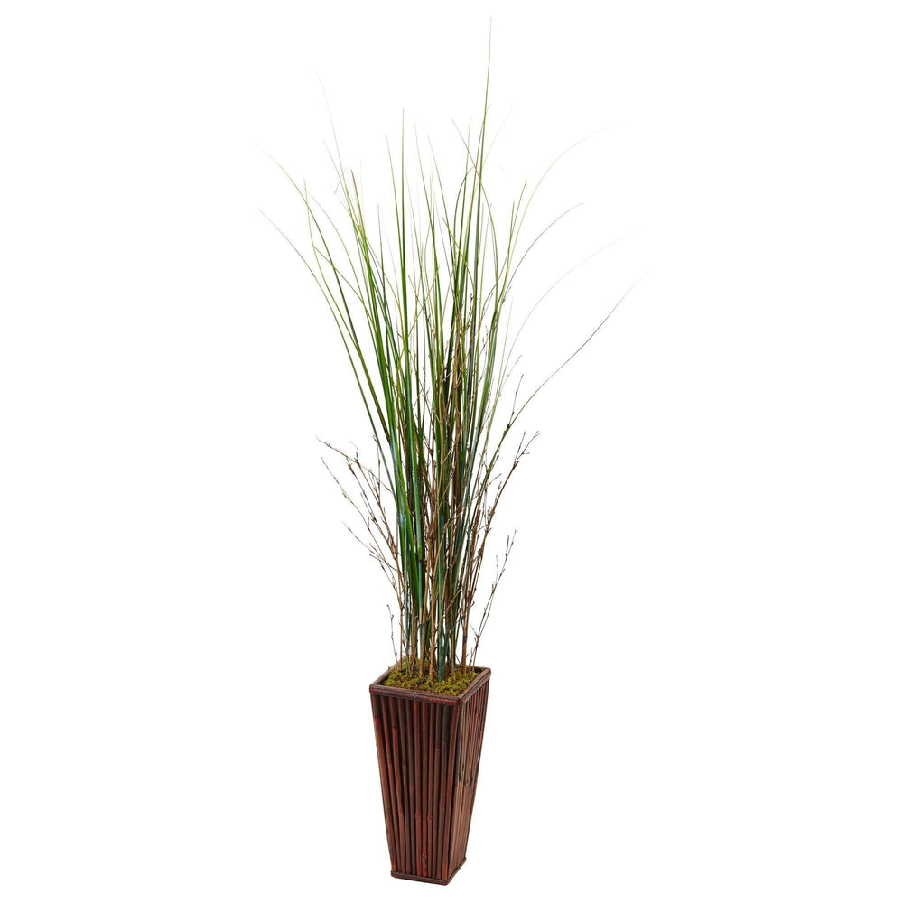 Bamboo Grass in Bamboo Planter