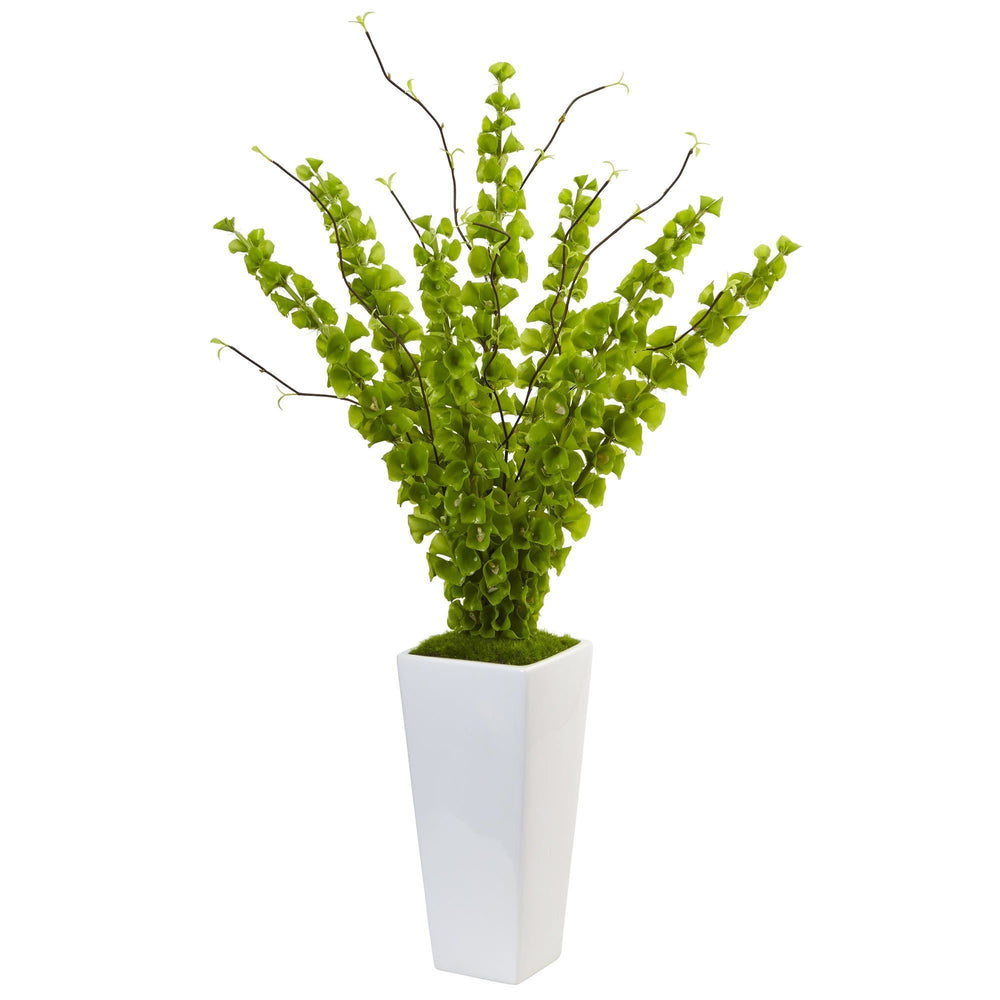 Bells of Ireland in White Planter