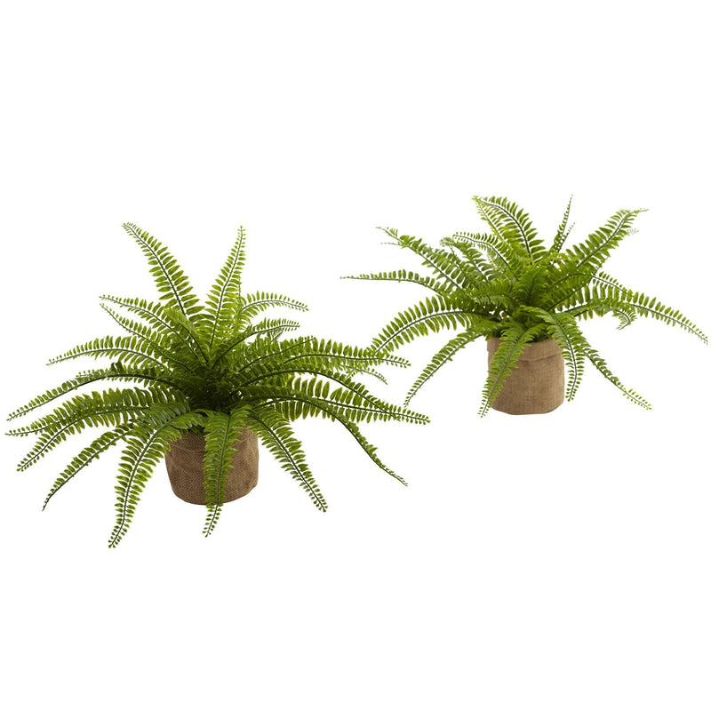 Boston Fern w/Burlap Planter (Set of 2)