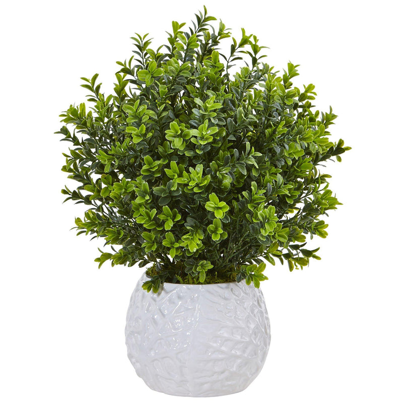 Boxwood in White Vase (Indoor/Outdoor)