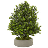 Boxwood Plant in Stone Planter (Indoor/Outdoor)