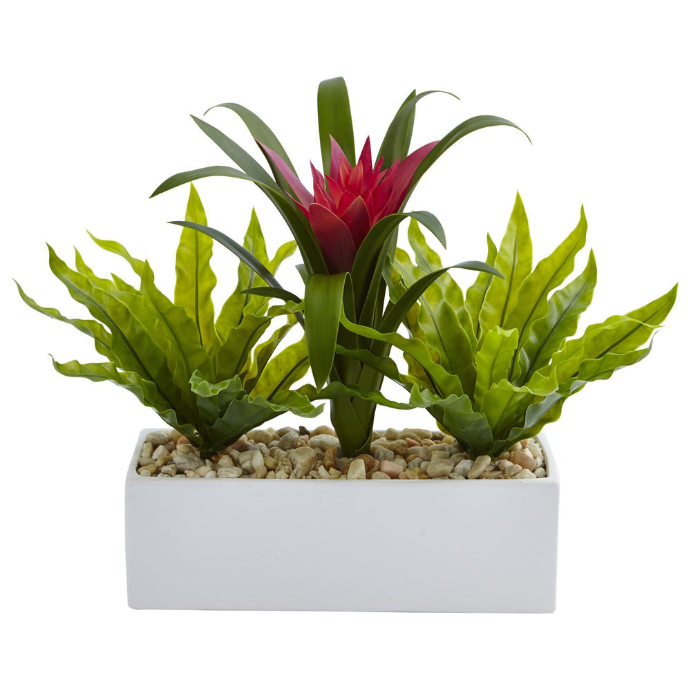 Bromeliad and Birdsnest in Rectangular Planter