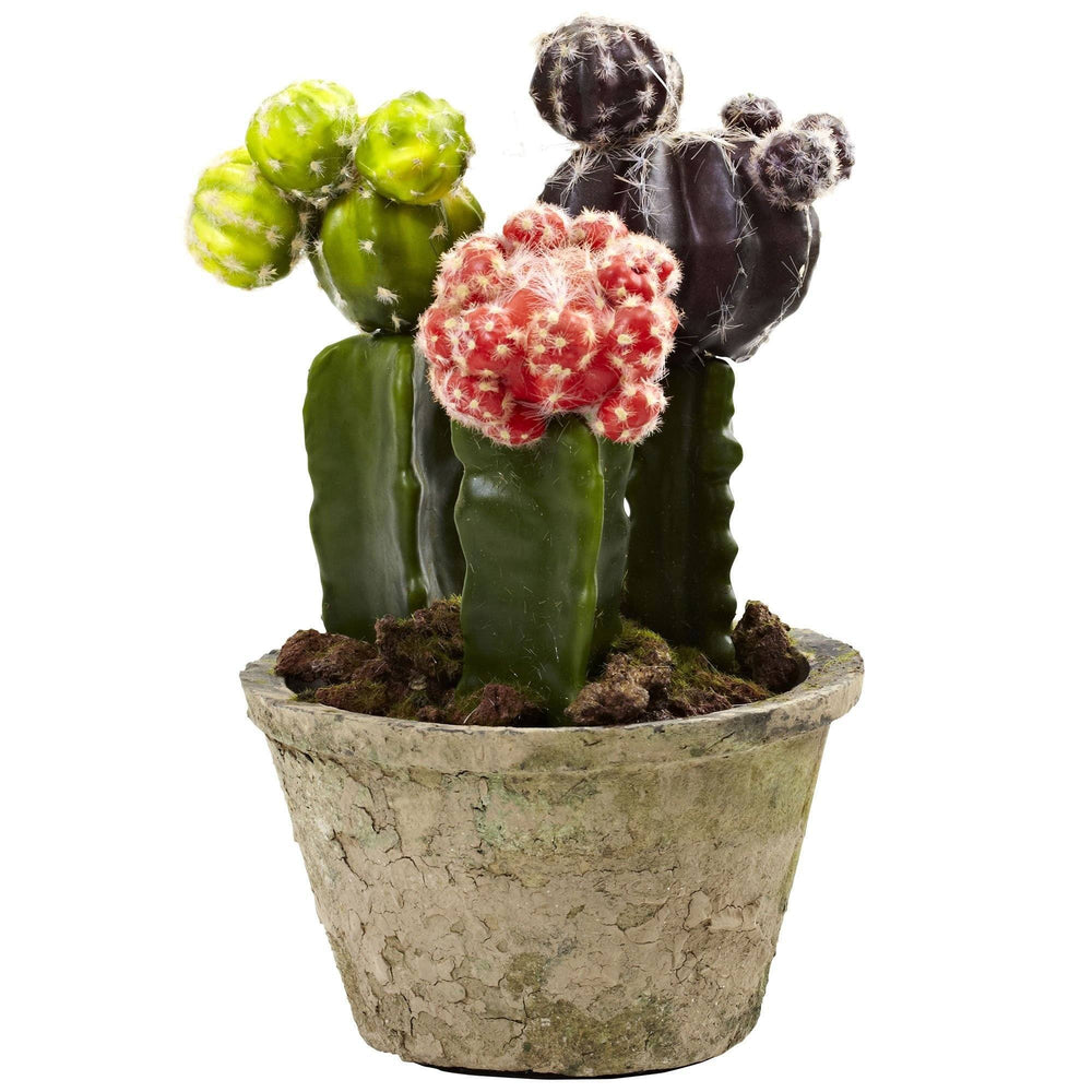 Colorful Cactus Gardens (Set of 2)