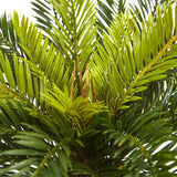 Cycas in White Planter