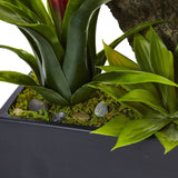 Dendrobium and Bromeliad Arrangement