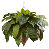 Giant Bird's Nest Fern with Cone Hanging Basket