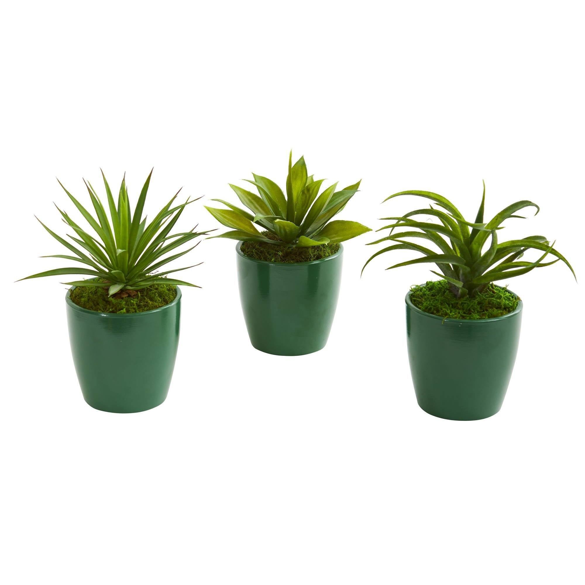 Mini Agaves Artificial Plant In Green Planter Set Of 3 Nearly Natural