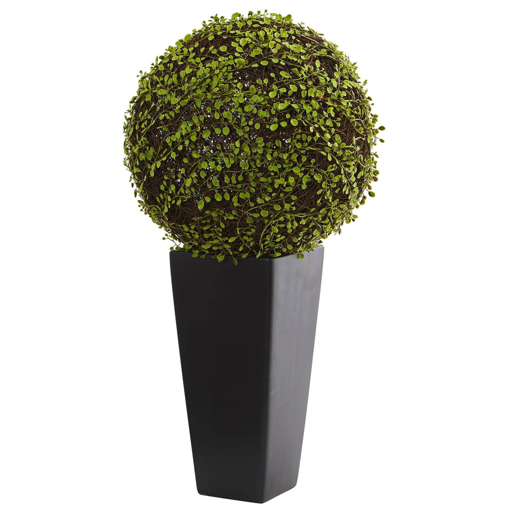 Mohlenbechia Ball Artificial Plant in Black Tower Vase