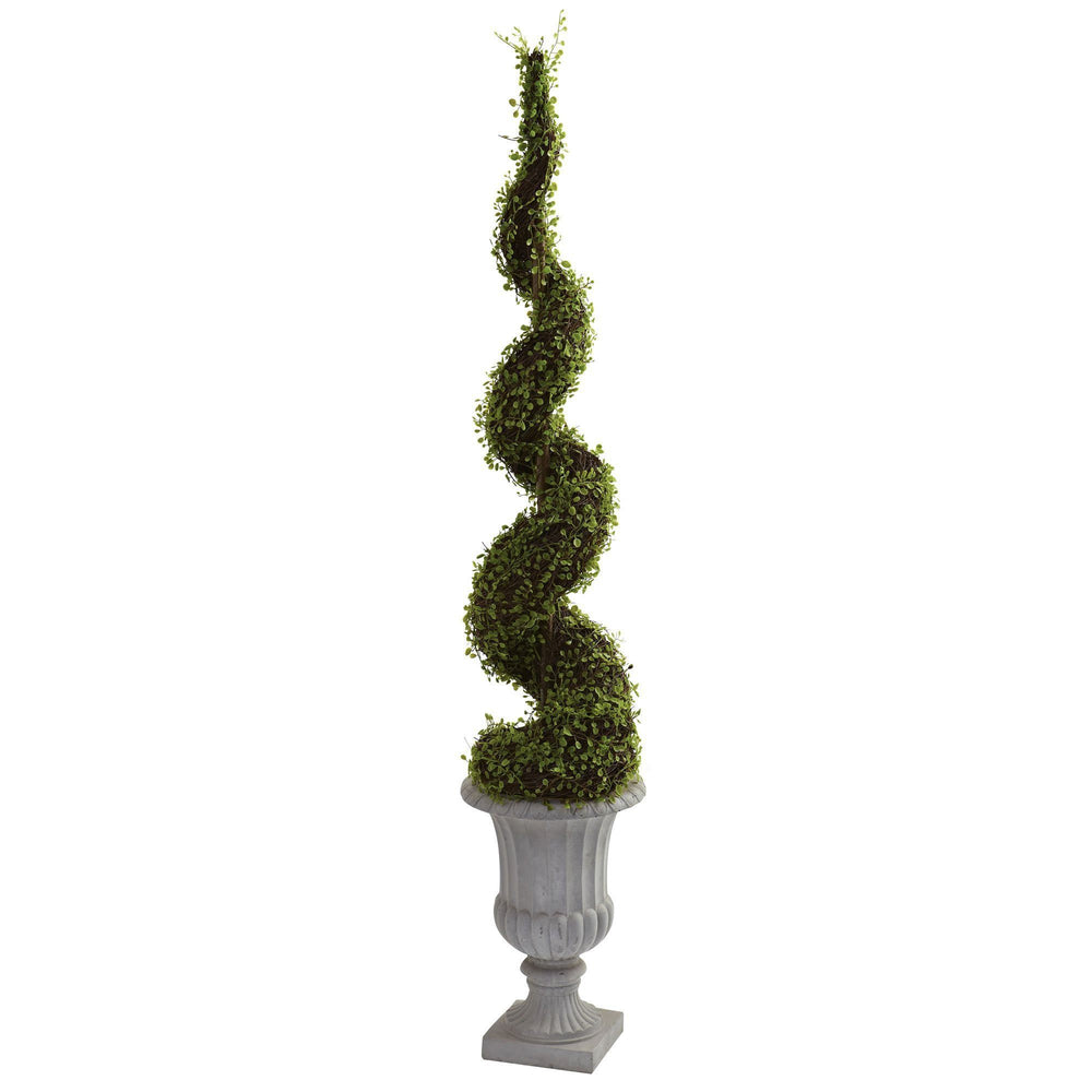 Mohlenbechia Spiral Tree w/Decorative Urn