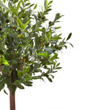 Olive Topiary Tree with Farmhouse Planter