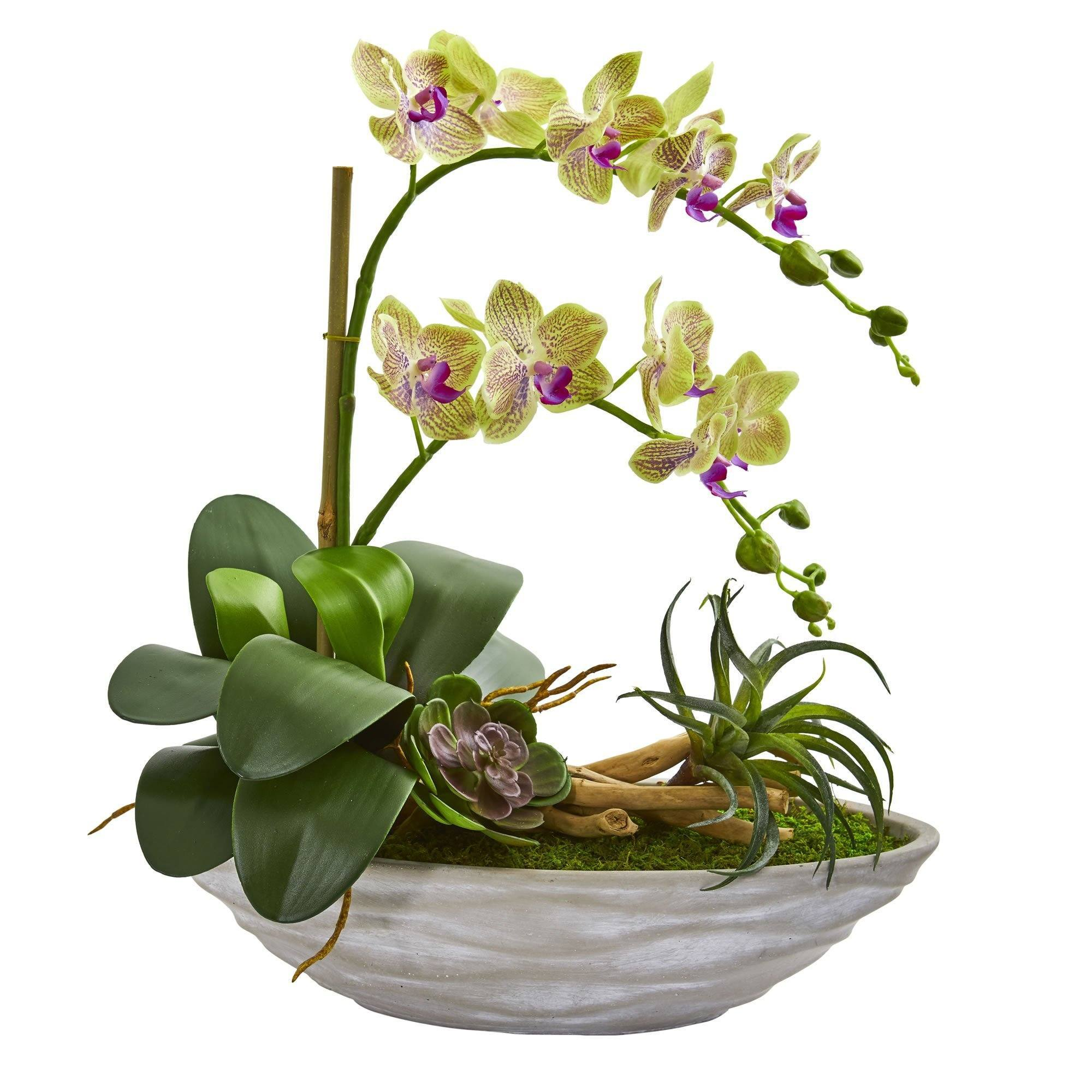 Phalaenopsis Orchid And Succulent Artificial Arrangement In White Vase Nearly Natural