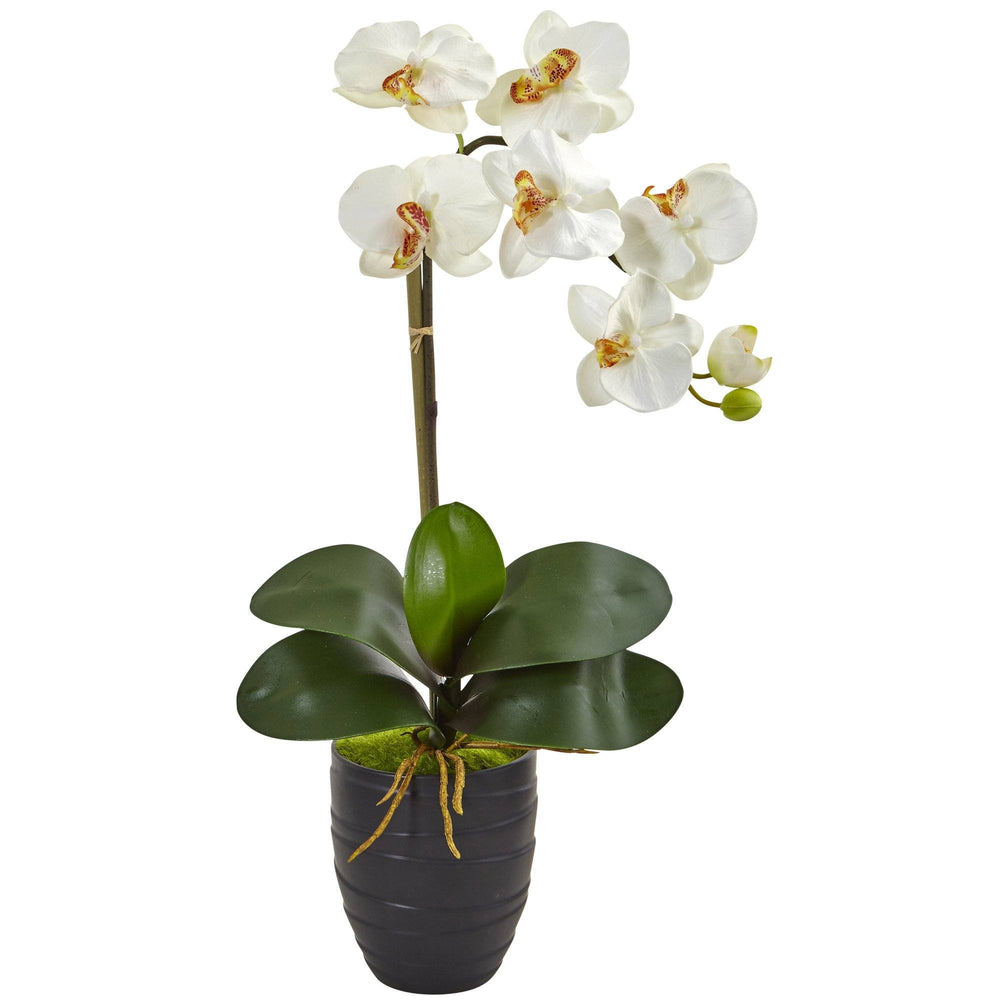Phalaenopsis Orchid In Black Vase 1479 Nearly Natural