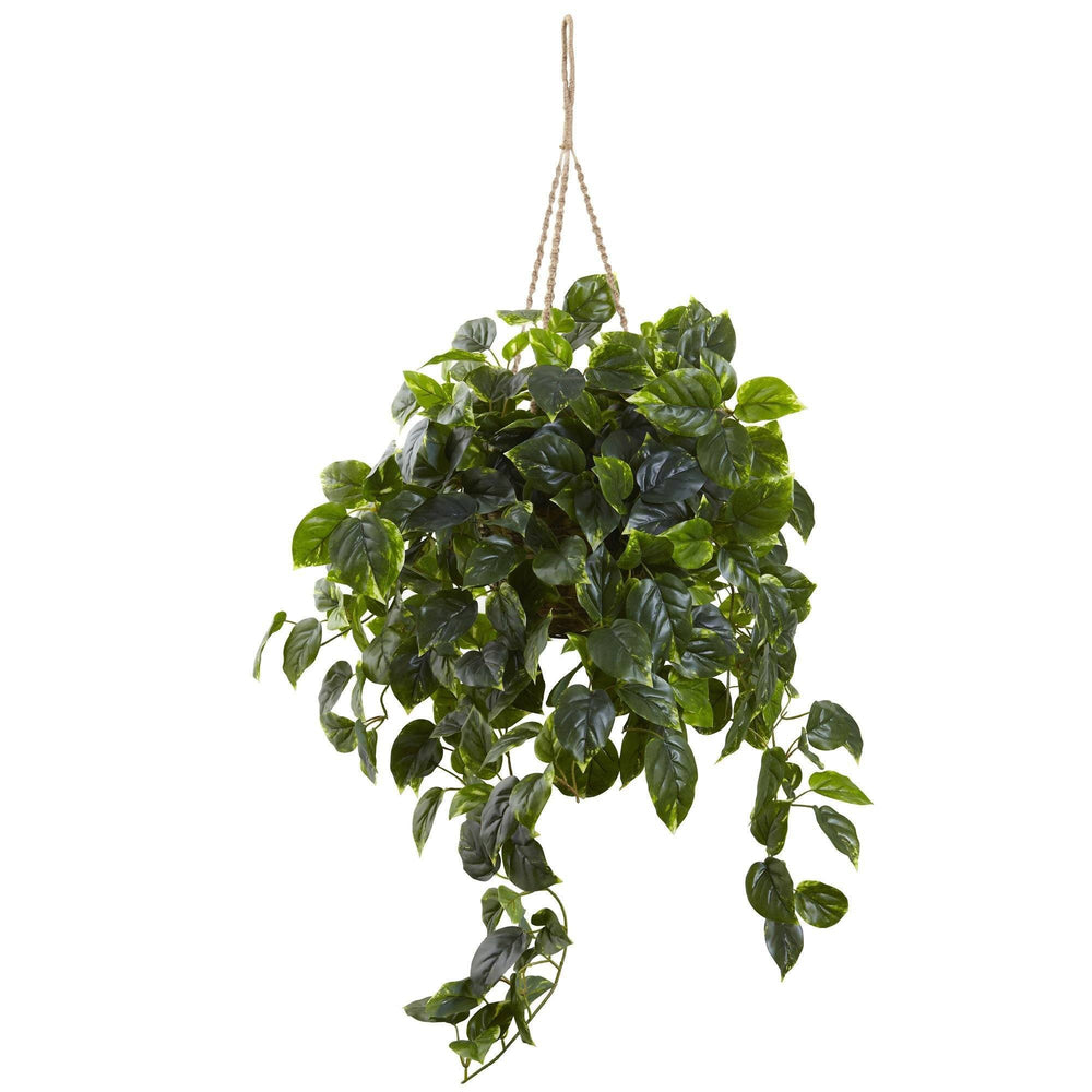 Pothos Hanging Basket UV Resistant (Indoor/Outdoor)