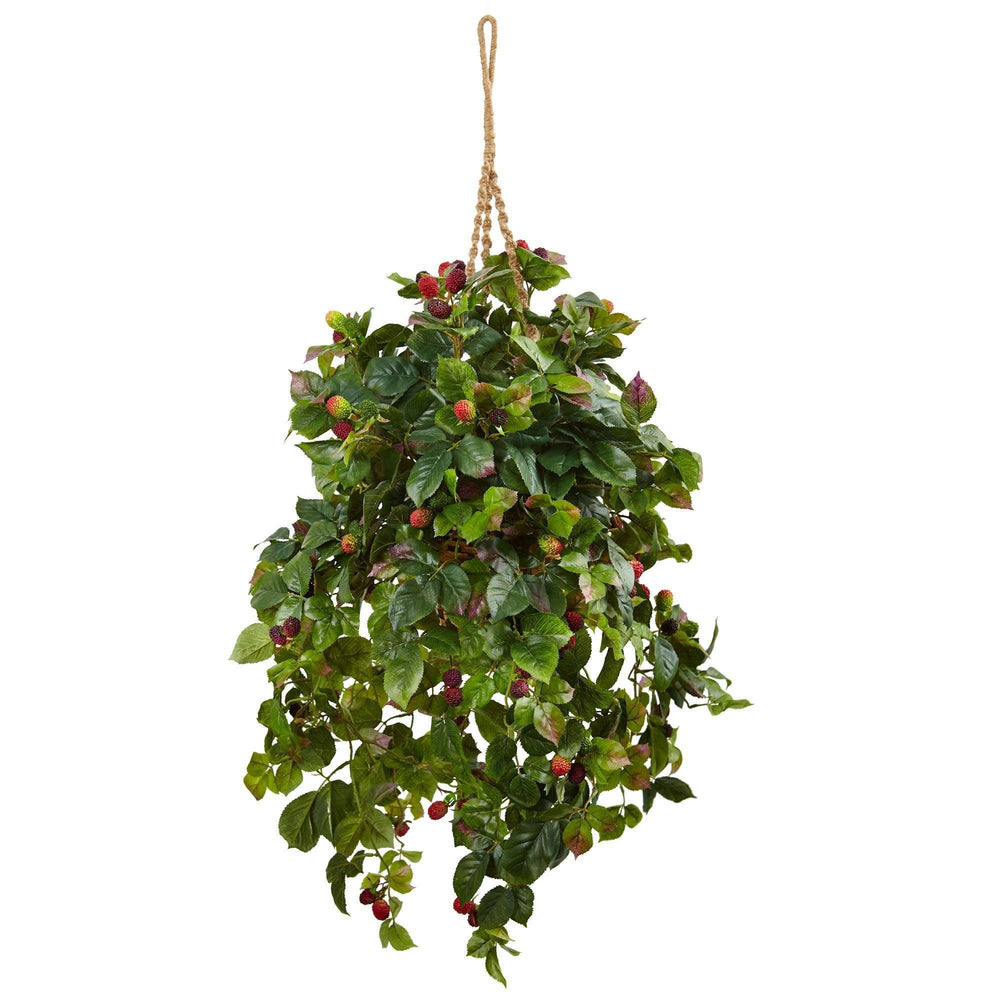 Raspberry Plant Hanging Basket