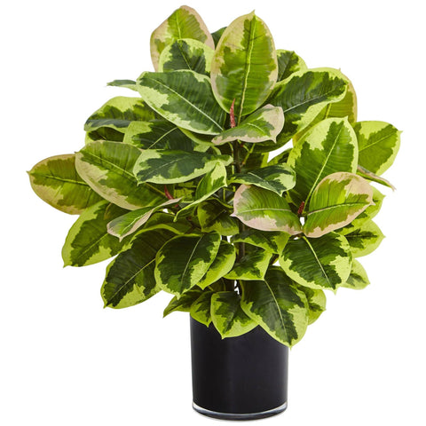 Silk Rubber Leaf Plants