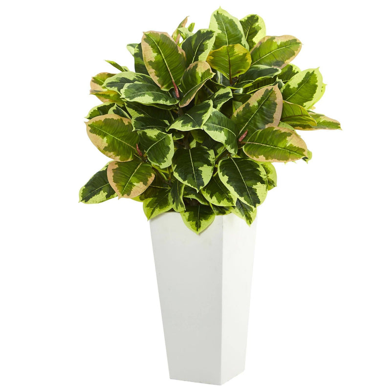 Variegated Rubber Artificial Plant in White Tower Planter  (Real Touch)
