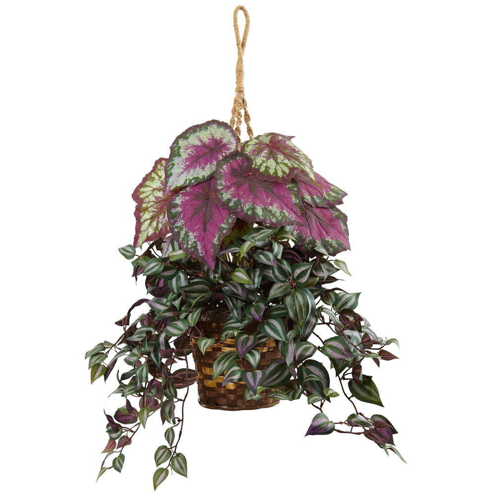 Wandering Jew and Begonia Hanging Basket