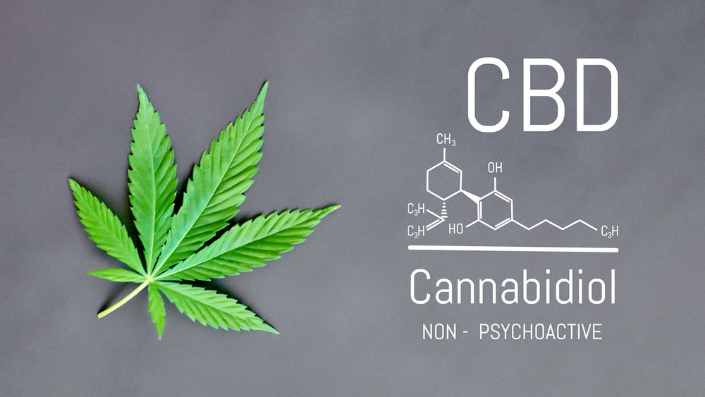 What is Cannabidiol (CBD) and The Endocannabinoid System