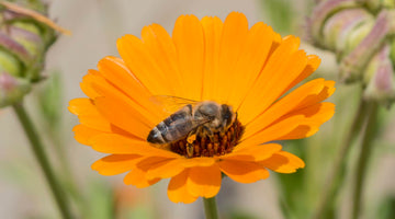 5 ways we are helping the British honeybee
