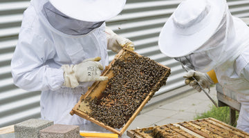 Bee hives in major cities around the world