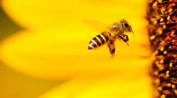 Keepr's Great British Bee Photo Competition