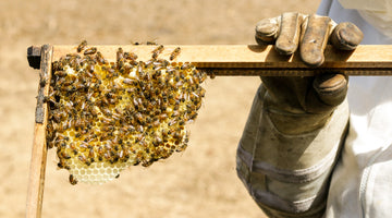 Beekeeping: It's never too young to start