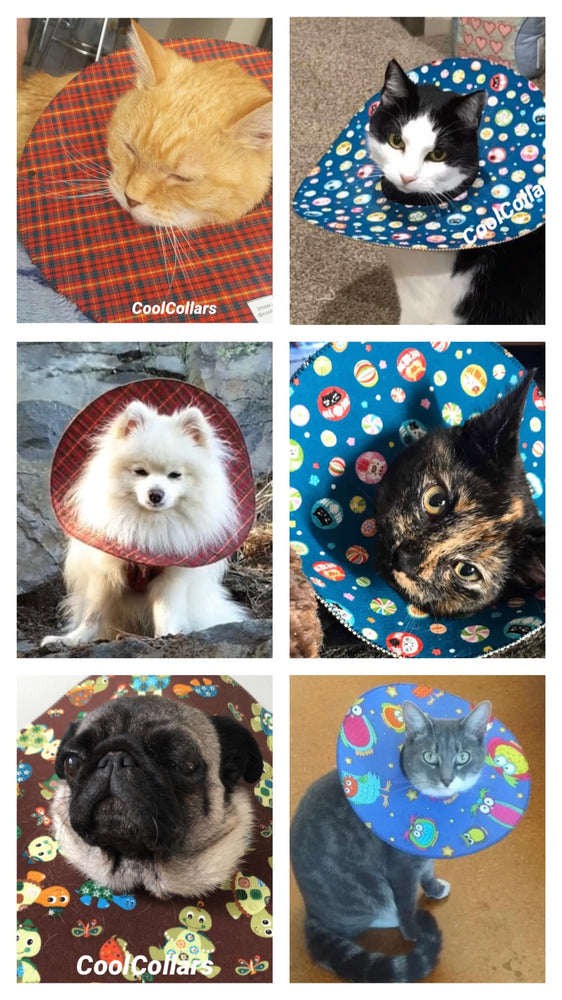 Protective Pet Collars (CoolCollars) - Prevent Scratching or Biting Wounds