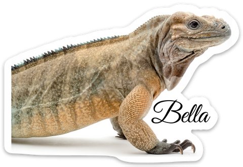 Bella Sticker - BHB Reptiles
