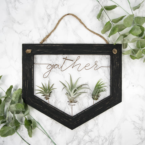 Gather • Air Plant Holder - rustandglam