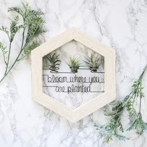 Bloom Where You Are Planted • Air Plant Holder - rustandglam