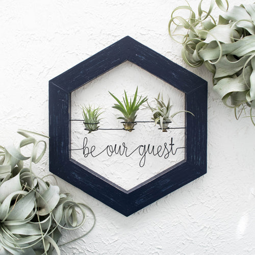 Be Our Guest • Air Plant Holder - rustandglam