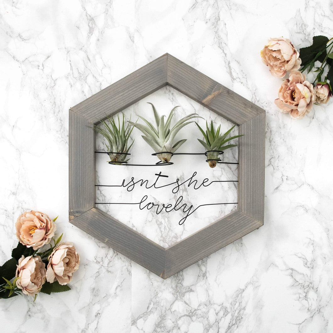Isnt She Lovely • Air Plant Holder - rustandglam