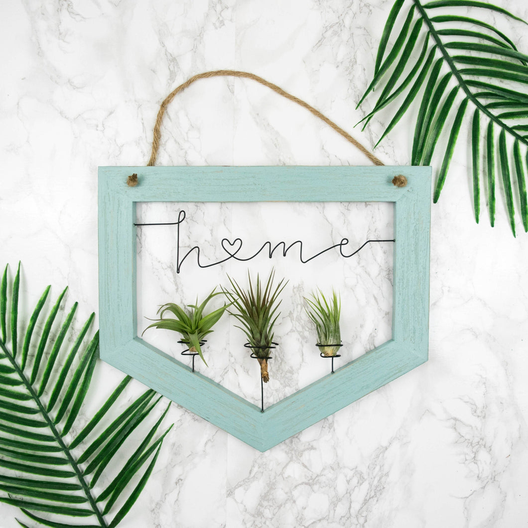 Home • Air Plant Holder - rustandglam