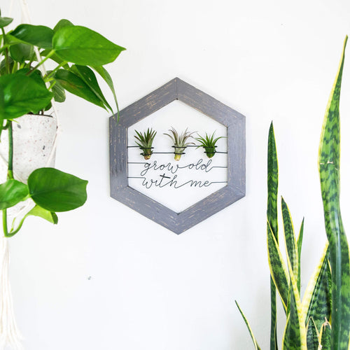 Grow Old With Me • Air Plant Holder - rustandglam